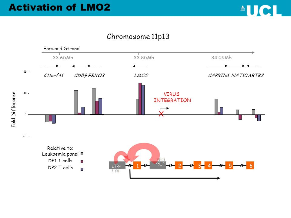 Activation of LMO2 Chromosome 11p13 X Forward Strand 33.65Mb 33.85Mb
