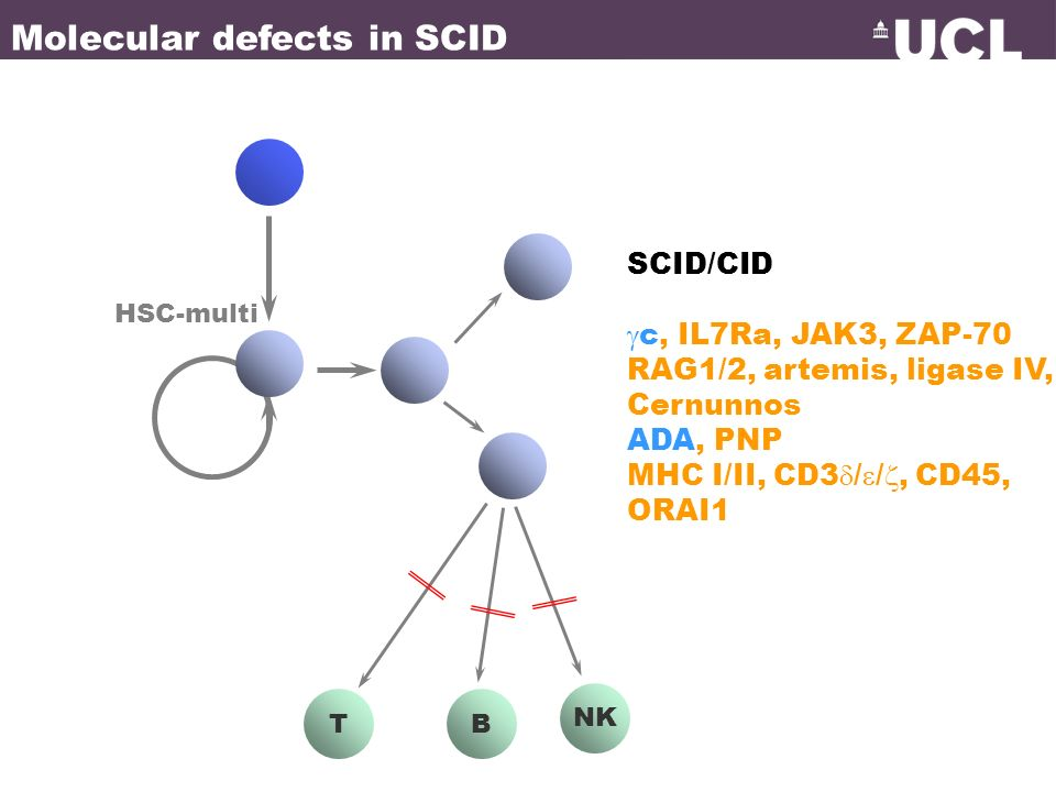 Molecular defects in SCID