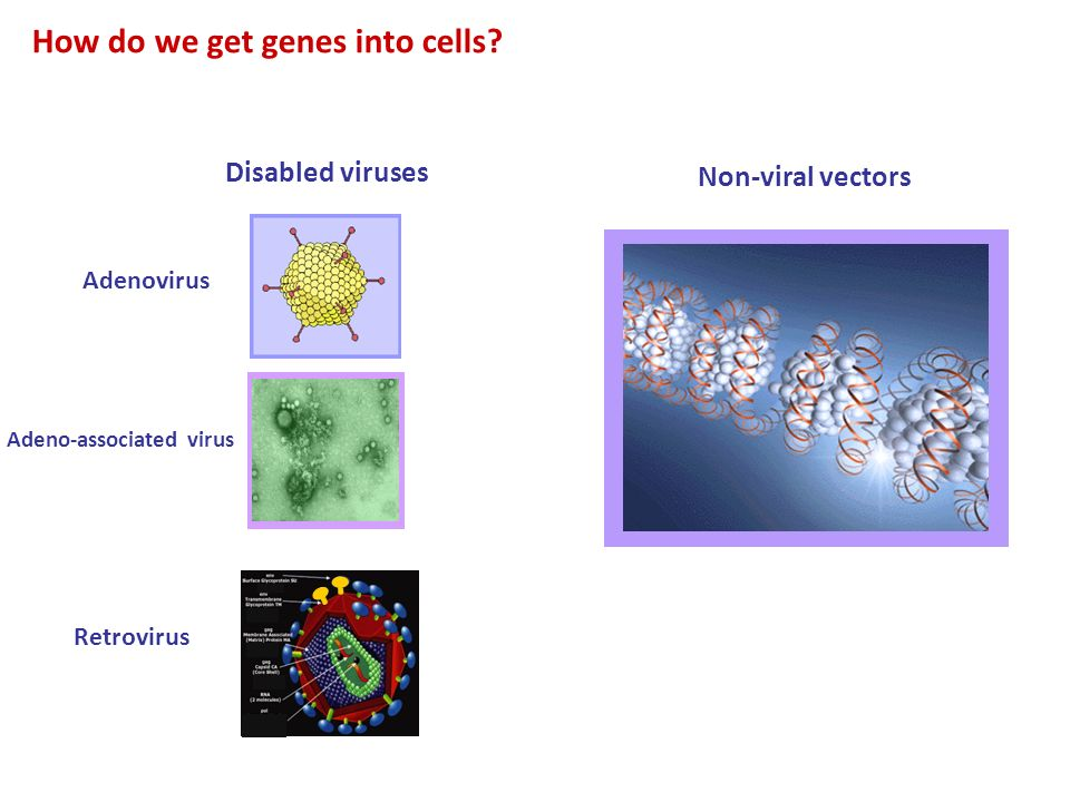 How do we get genes into cells
