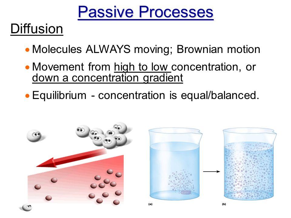 brownian motion diffusion and osmosis 3-1 membrane transport mechanisms & osmosis brownian motion in 1827, the english botanist  3-3 osmosis the diffusion of water through a.
