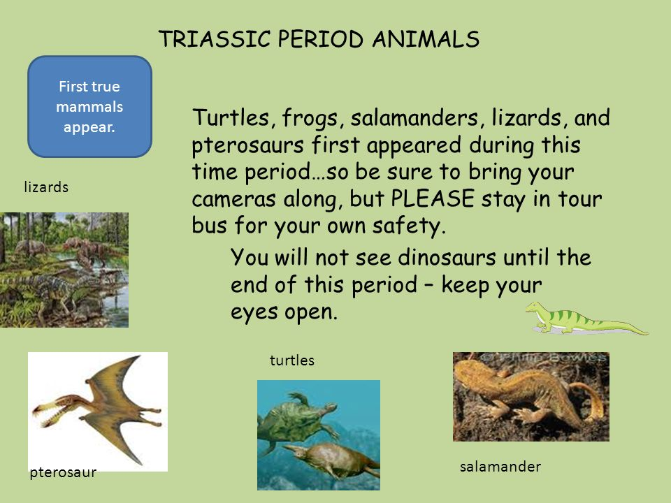 Triassic Period Plants LIMITED SPACE AVAILABL...