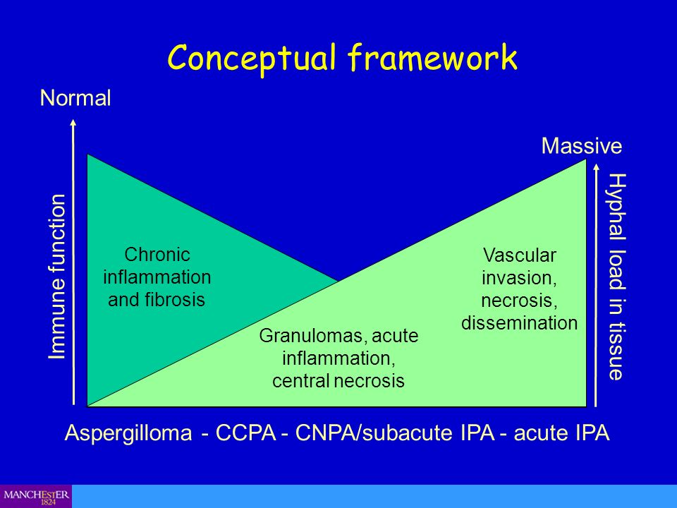 Conceptual framework Normal Massive Hyphal load in tissue