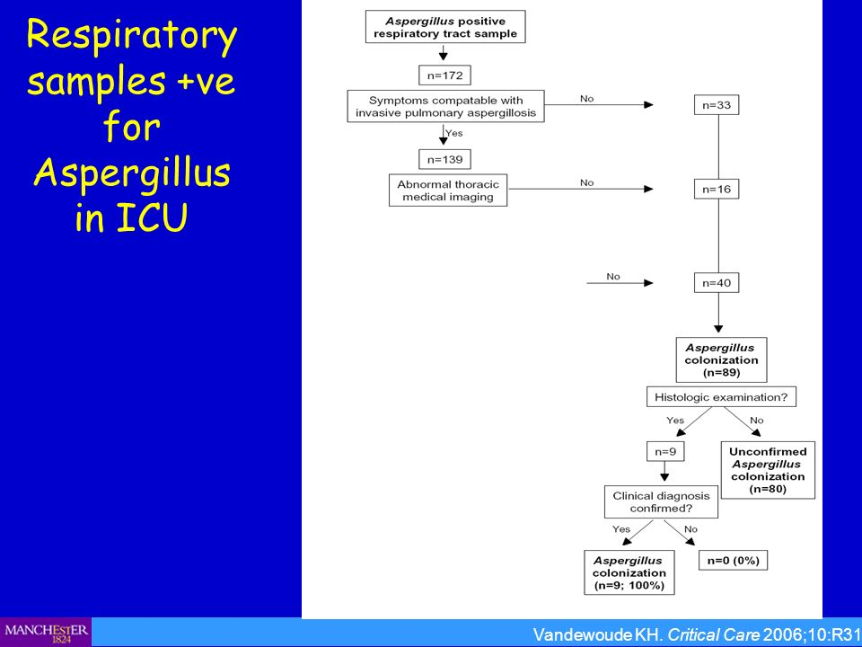 Respiratory samples +ve for Aspergillus in ICU