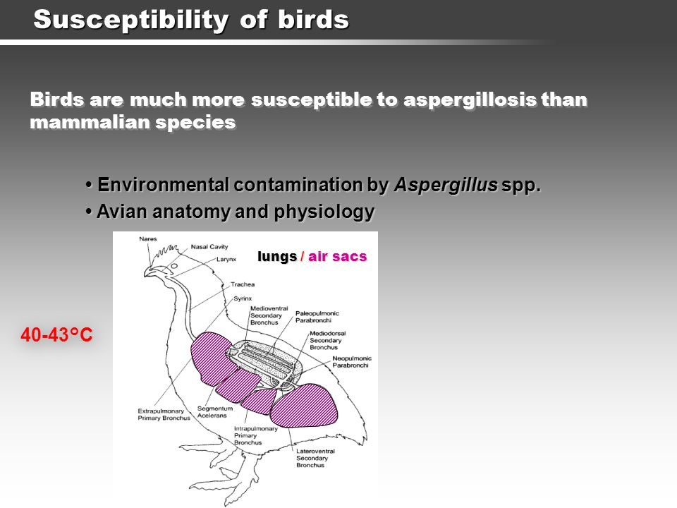 Susceptibility of birds