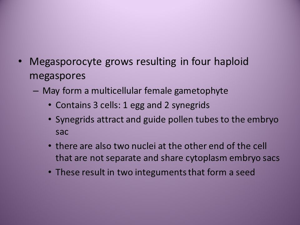 Megasporocyte grows resulting in four haploid megaspores