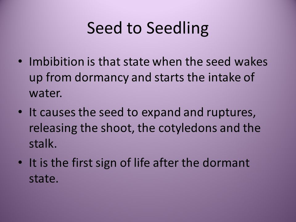 Seed to Seedling Imbibition is that state when the seed wakes up from dormancy and starts the intake of water.