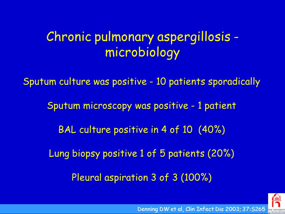 Chronic pulmonary aspergillosis -microbiology