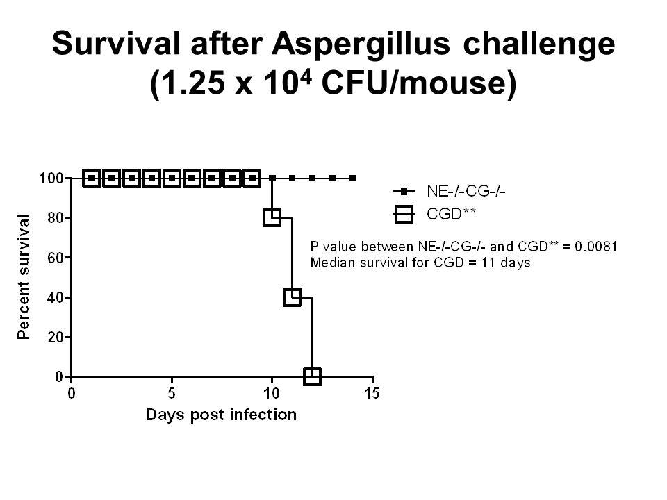Survival after Aspergillus challenge (1.25 x 104 CFU/mouse)