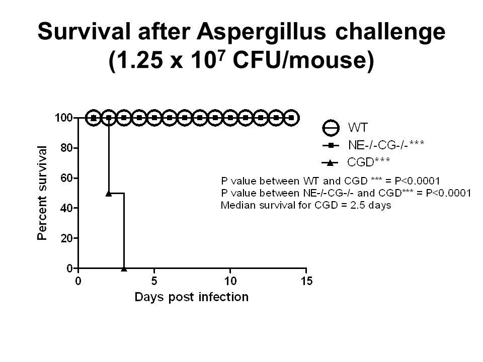 Survival after Aspergillus challenge (1.25 x 107 CFU/mouse)
