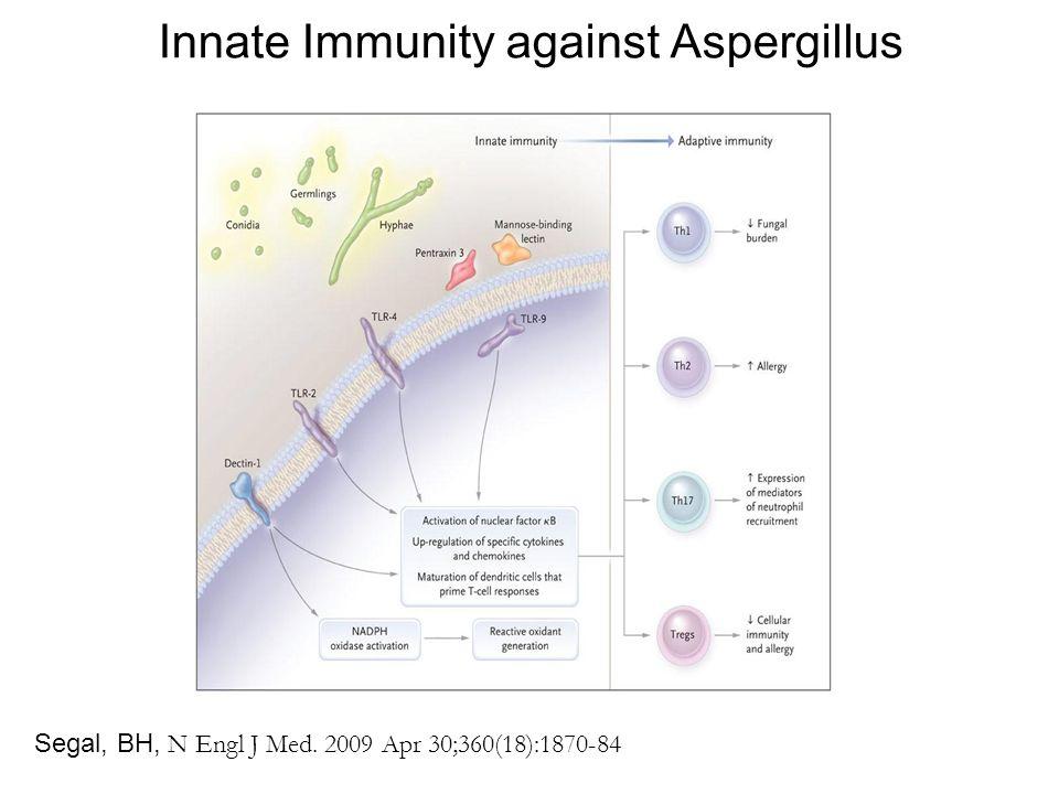 Innate Immunity against Aspergillus