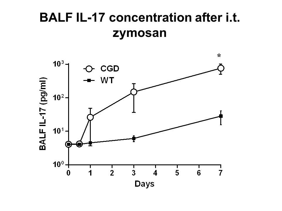 BALF IL-17 concentration after i.t. zymosan