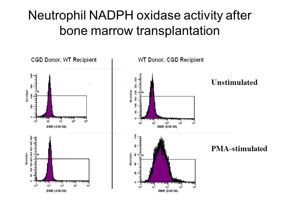 Neutrophil NADPH oxidase activity after bone marrow transplantation