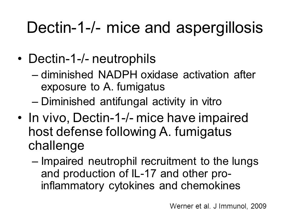 Dectin-1-/- mice and aspergillosis