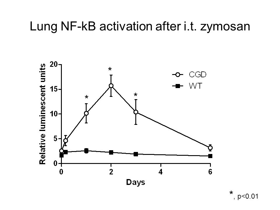 Lung NF-kB activation after i.t. zymosan