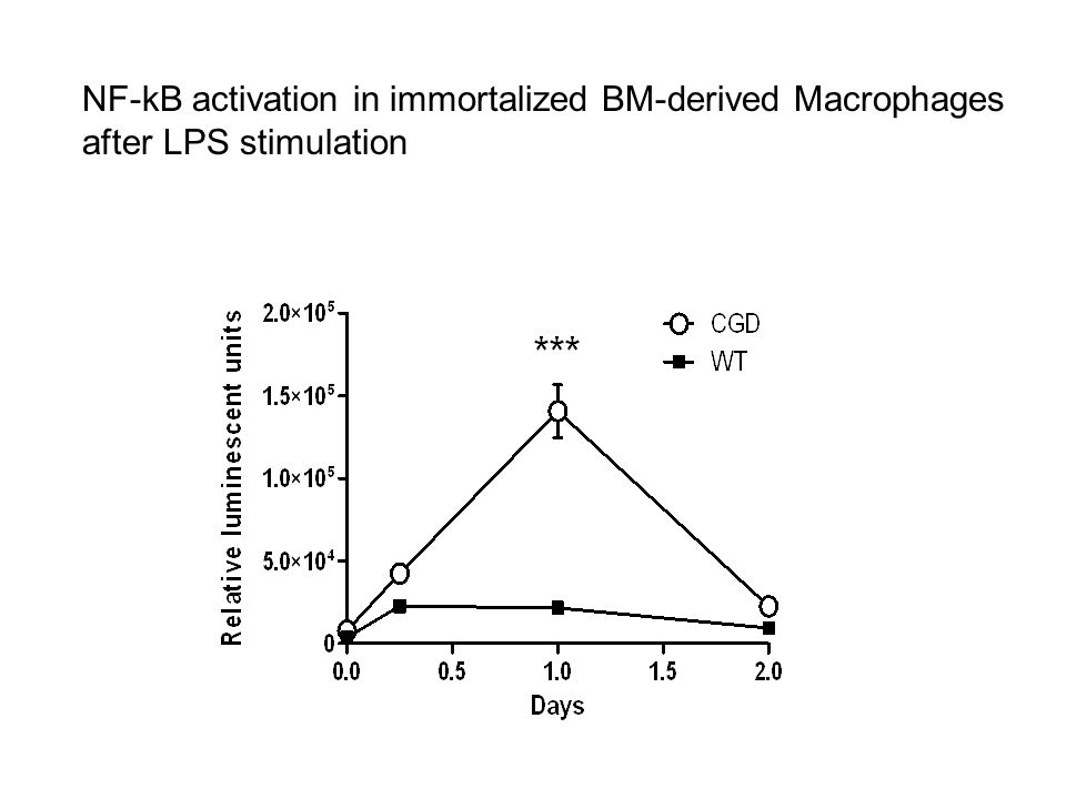 NF-kB activation in immortalized BM-derived Macrophages