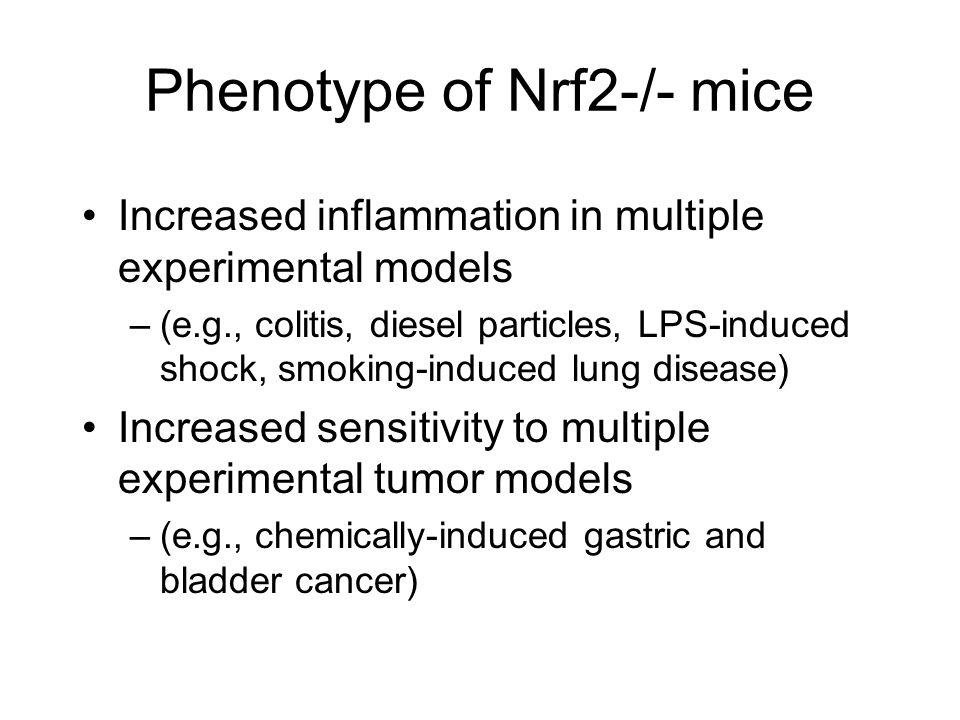 Phenotype of Nrf2-/- mice