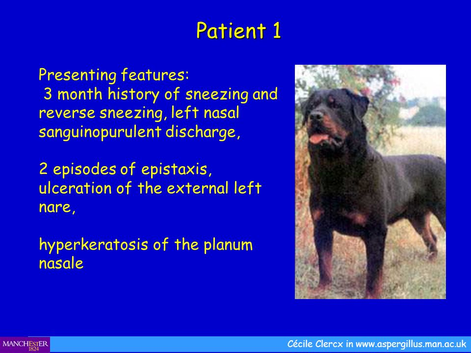 Patient 1 Presenting features: