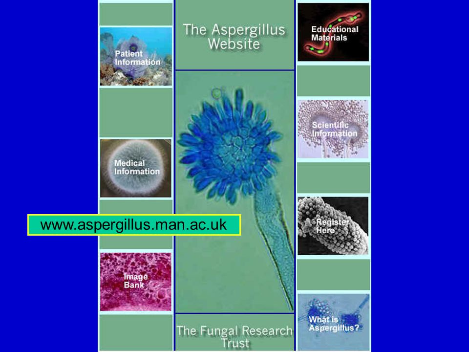 www.aspergillus.man.ac.uk
