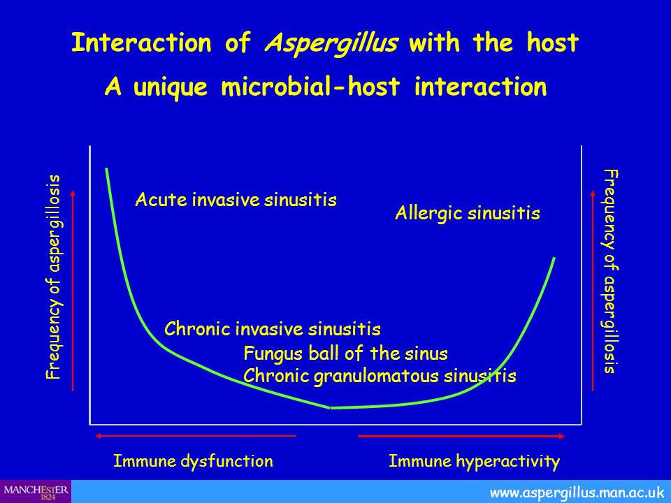 Interaction of Aspergillus with the host A unique microbial-host interaction