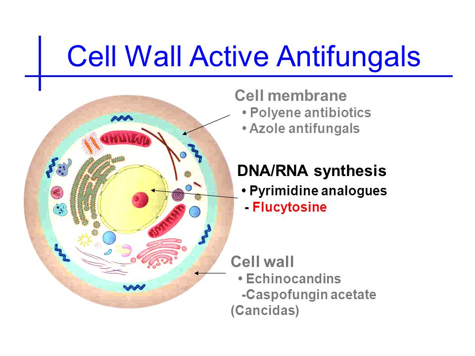 Cell Wall Active Antifungals