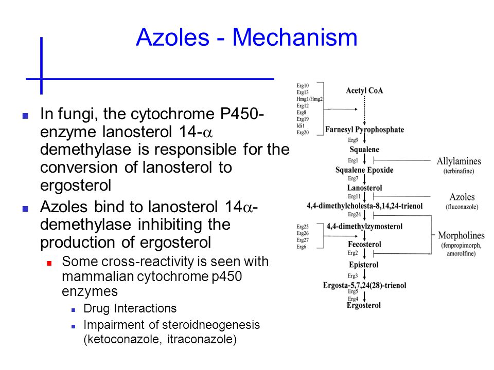 Azoles - Mechanism In fungi, the cytochrome P450-enzyme lanosterol 14-a demethylase is responsible for the conversion of lanosterol to ergosterol.