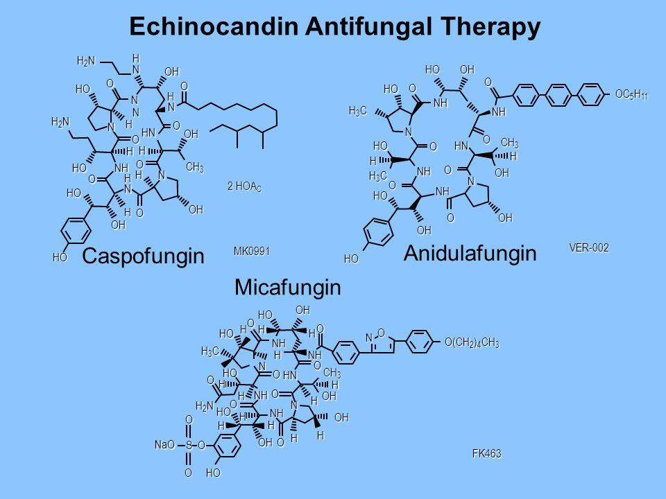 Echinocandin Antifungal Therapy