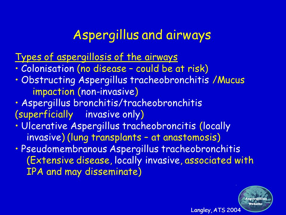 Aspergillus and airways