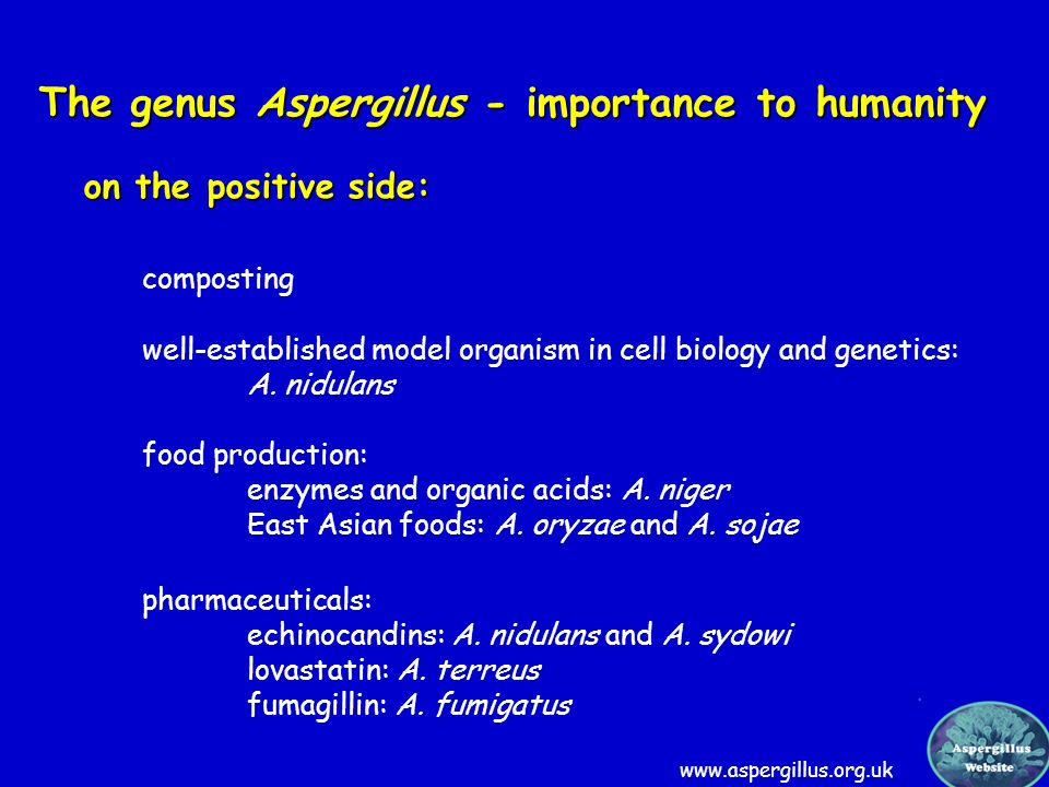 The genus Aspergillus - importance to humanity