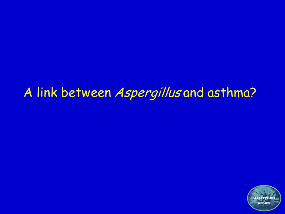 A link between Aspergillus and asthma