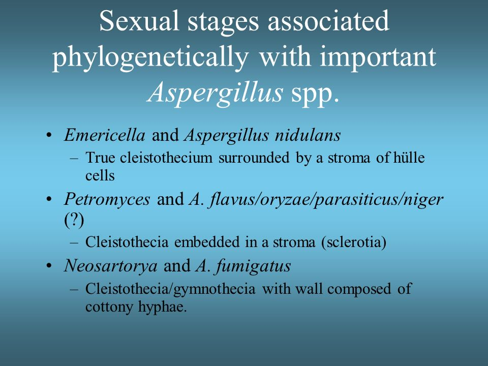 Sexual stages associated phylogenetically with important Aspergillus spp.