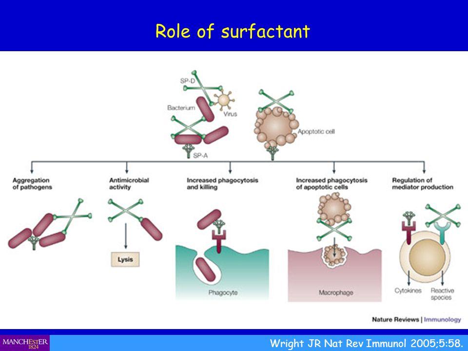 Role of surfactant Wright JR Nat Rev Immunol 2005;5:58.