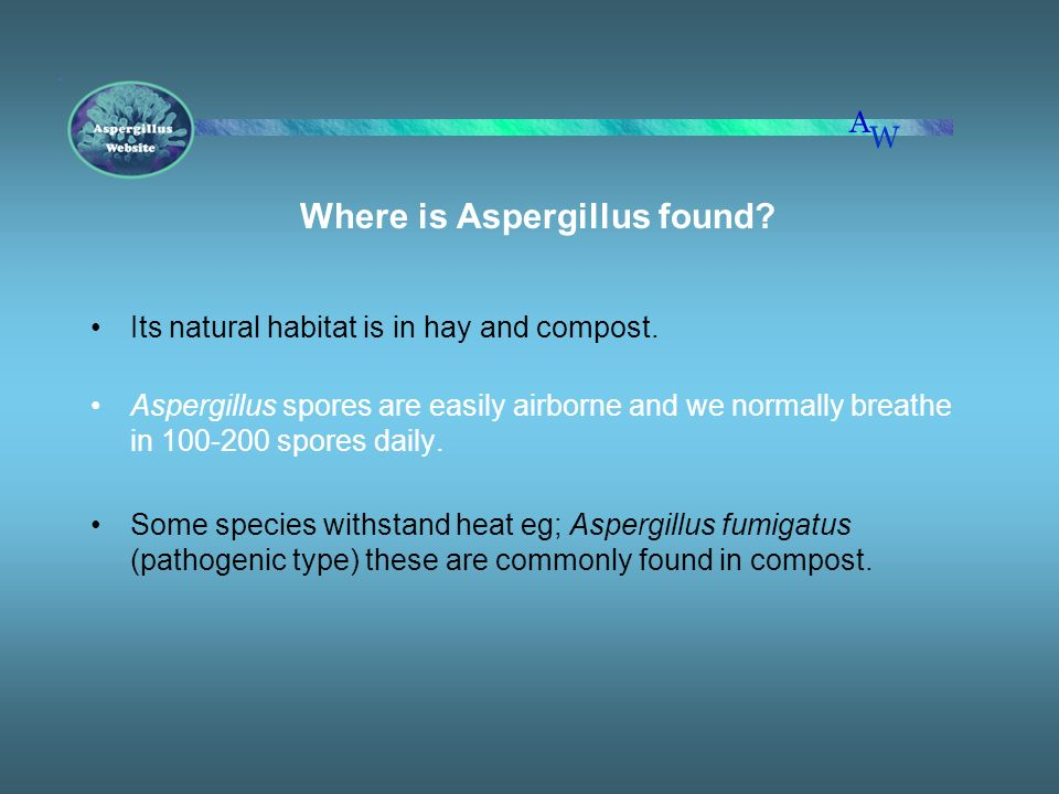 Where is Aspergillus found