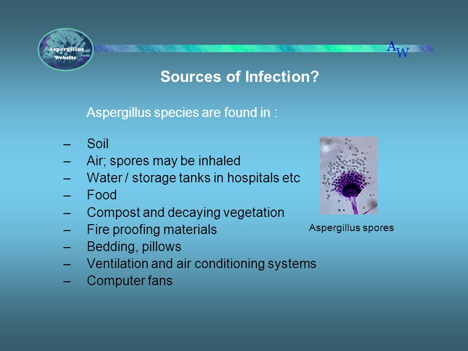 Air; spores may be inhaled Water / storage tanks in hospitals etc Food