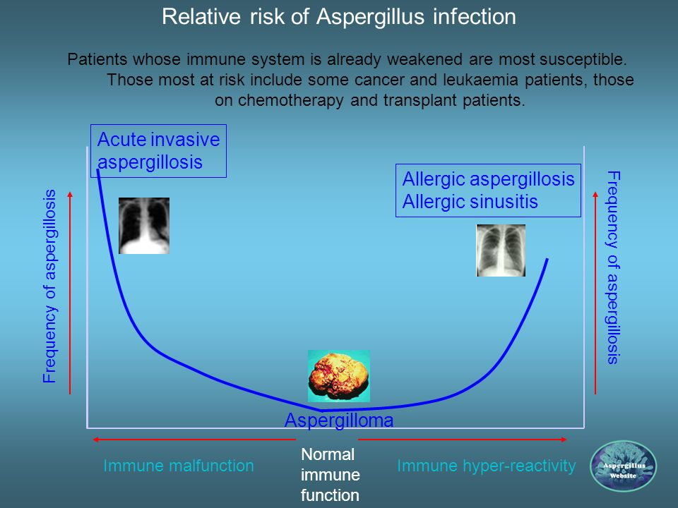 Relative risk of Aspergillus infection Aspergillus as a pathogen in man-