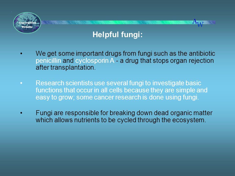 Helpful fungi: