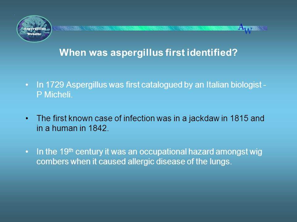 When was aspergillus first identified