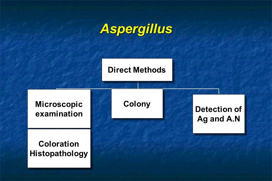 Microscopic examination
