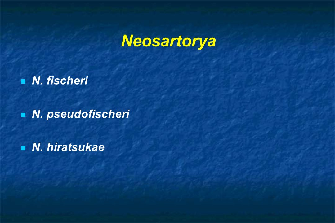 Neosartorya N. fischeri N. pseudofischeri N. hiratsukae