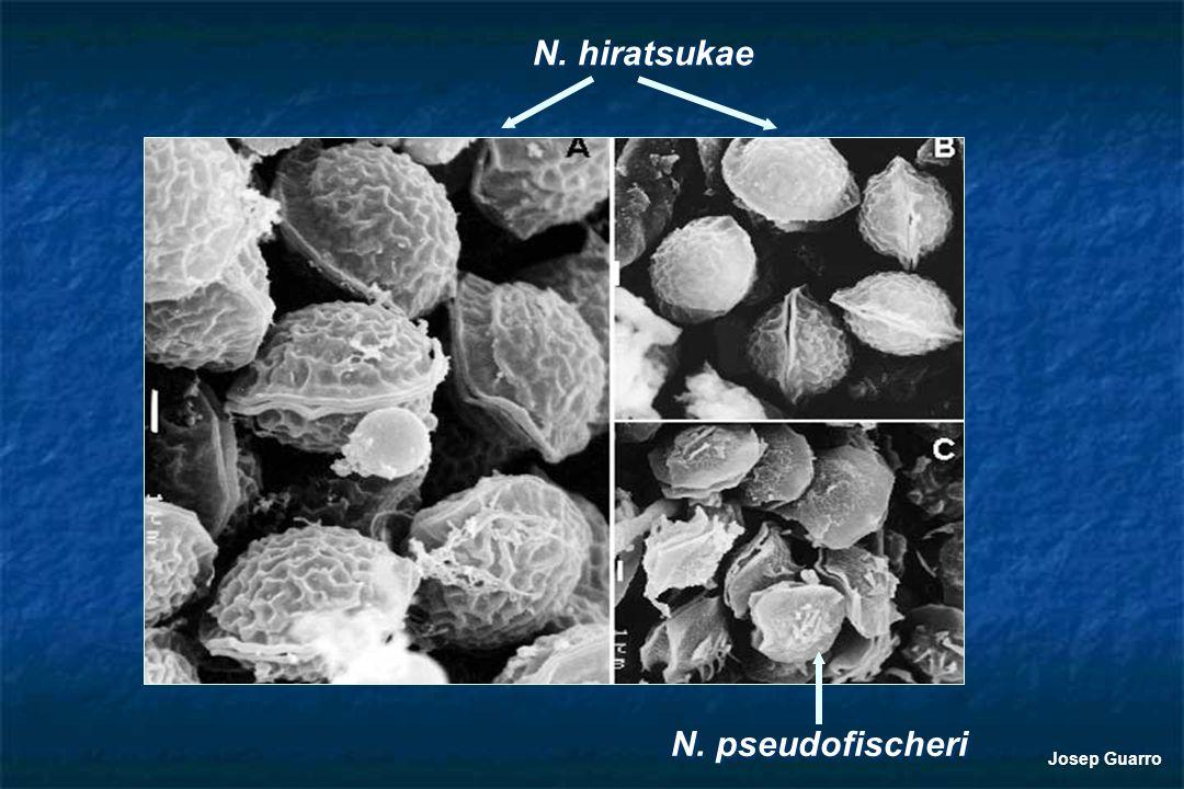N. hiratsukae N. pseudofischeri