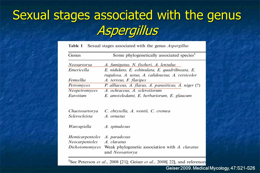 Sexual stages associated with the genus Aspergillus