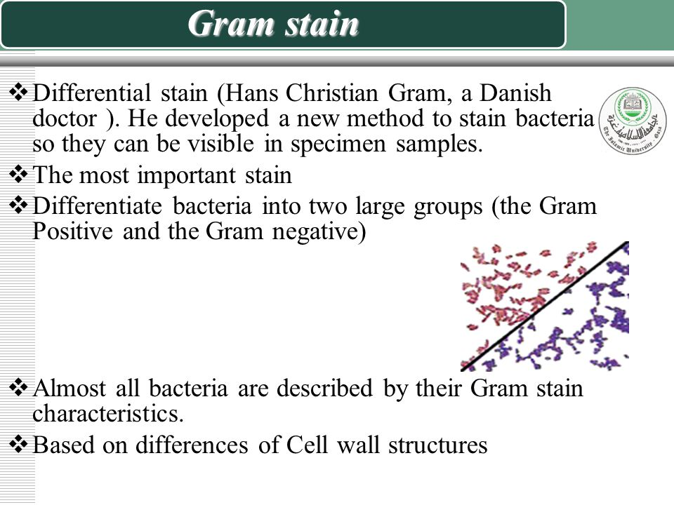 Cell structures and the gram stain
