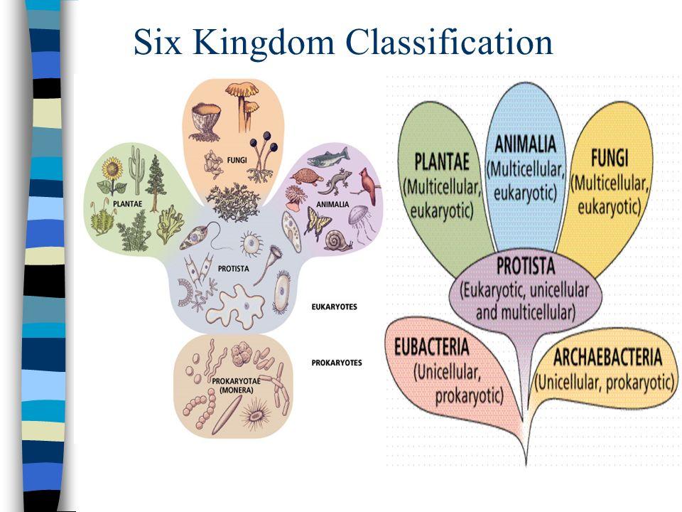 six kingdom classification - 960×720