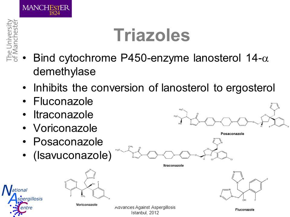 Triazoles Bind cytochrome P450-enzyme lanosterol 14- demethylase