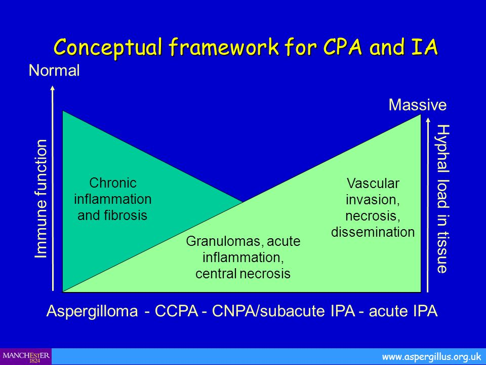 Conceptual framework for CPA and IA