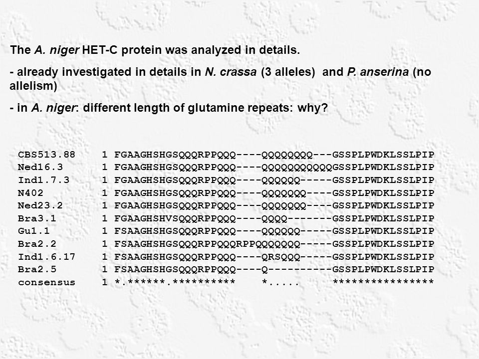 The A. niger HET-C protein was analyzed in details.