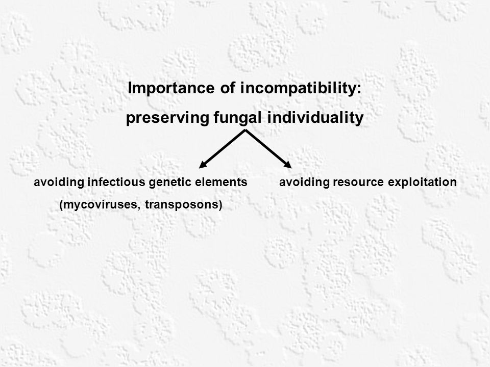 Importance of incompatibility: preserving fungal individuality