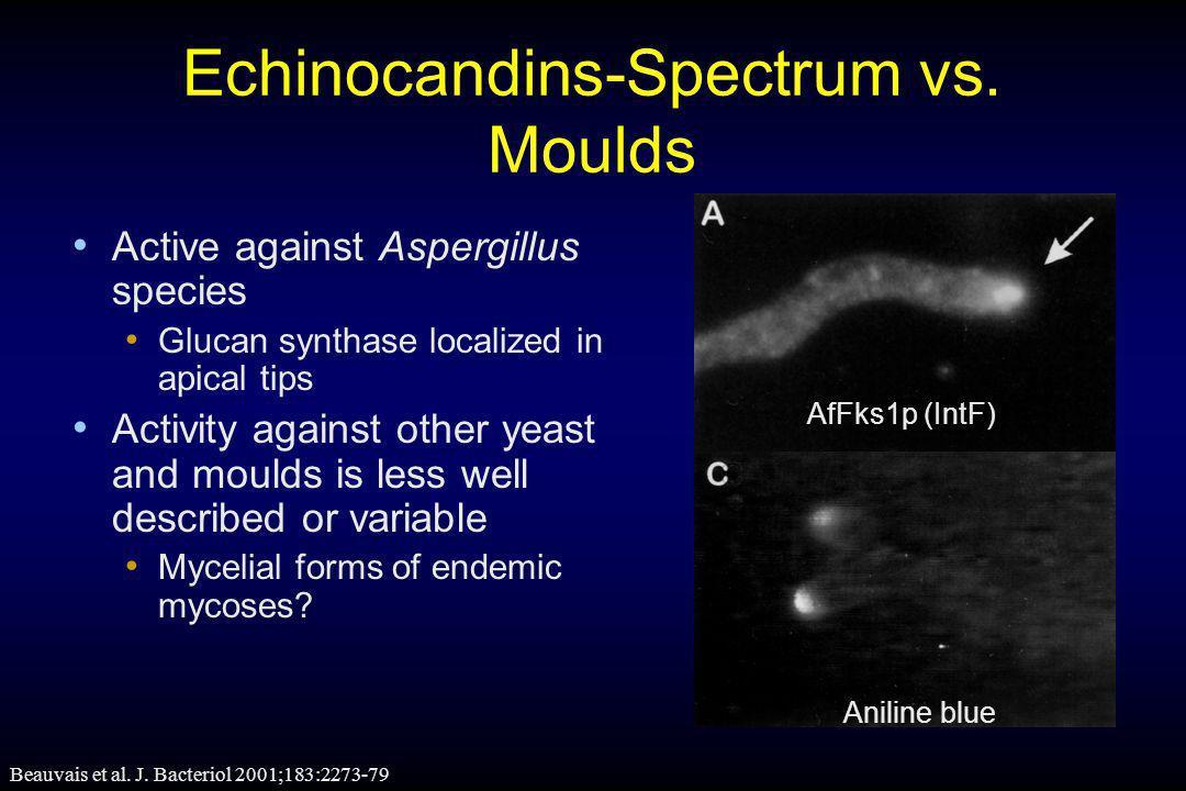 Echinocandins-Spectrum vs. Moulds
