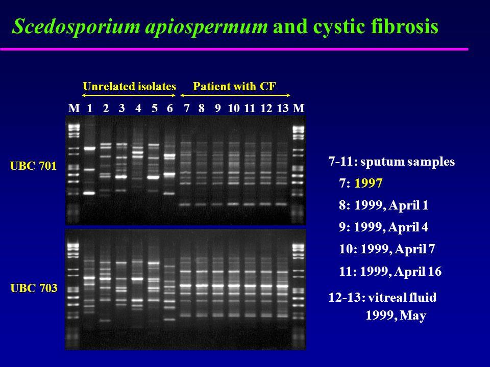 Scedosporium apiospermum and cystic fibrosis