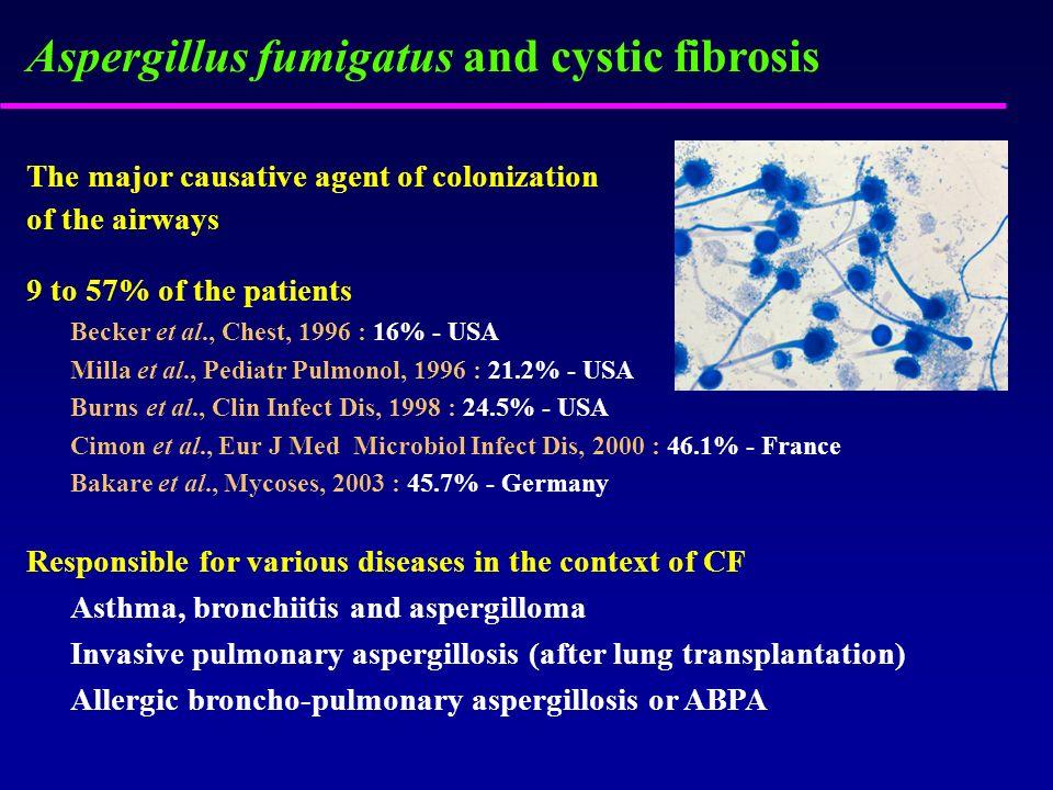 Aspergillus fumigatus and cystic fibrosis