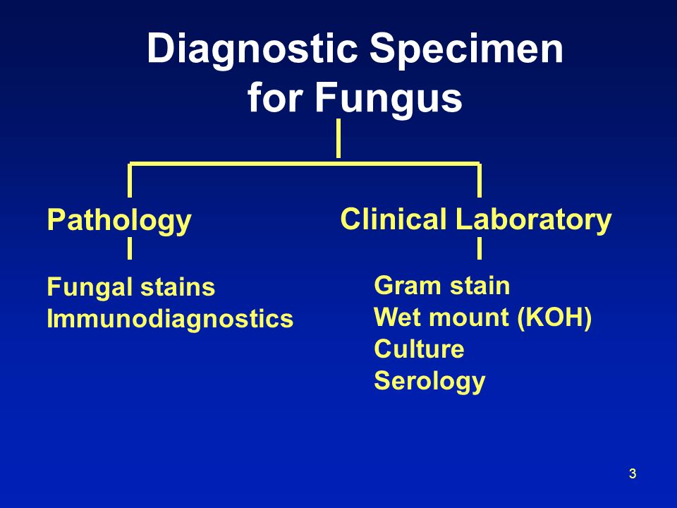 Diagnostic Specimen for Fungus